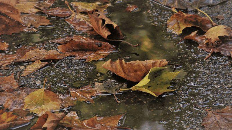 Herbstzeit und nasses Laub