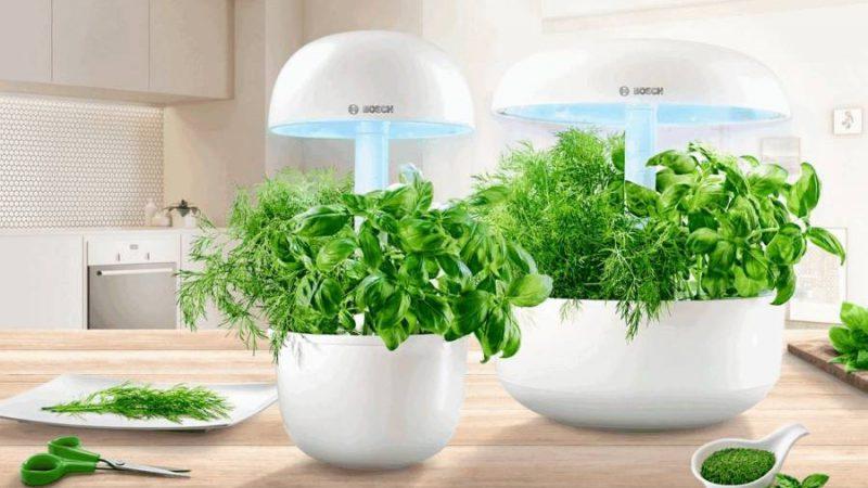 Digital Gardening – der Indoor-Kräutergarten
