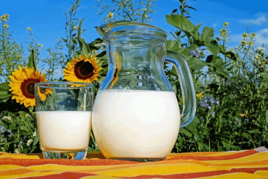 Pflanzendrinks – wie gesund sind die Milch-Alternativen?