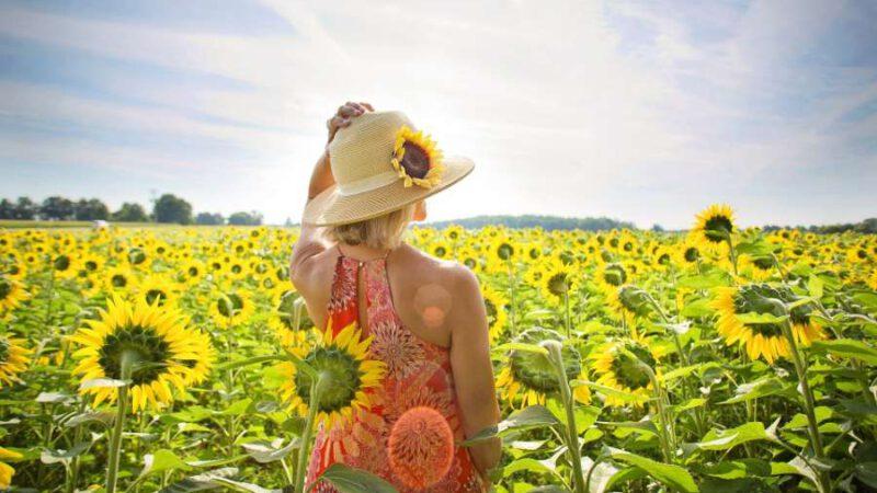 Sonnenblumen – Inbegriff von Sommer